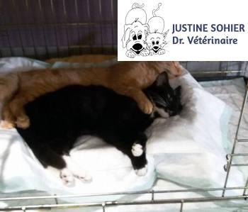 Sohier Justine - Chirurgie
