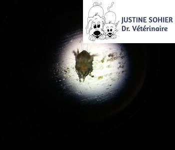 Justine Sohier - vétérinaire